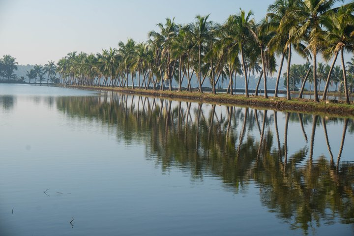coconut trees chalakudy road