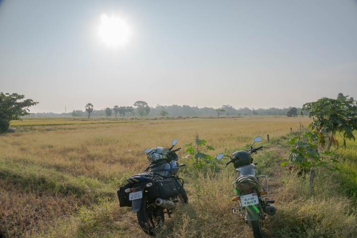 paddy field Palakkad