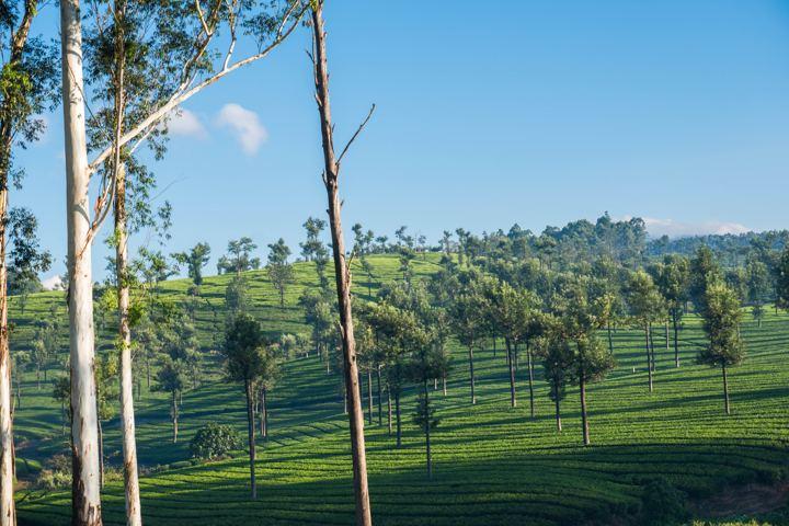 valpara tea estate