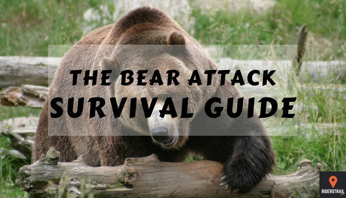 the bear attack survival guide