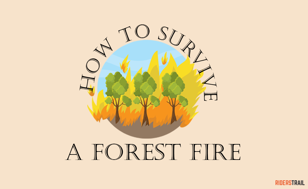 Survival guide-How to survive a forest fire while hiking