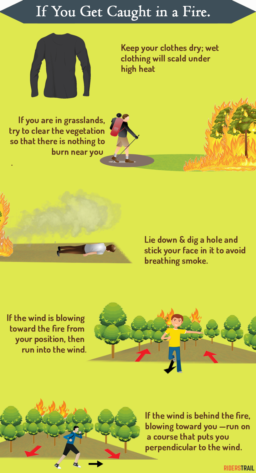 how to survive a forest fire