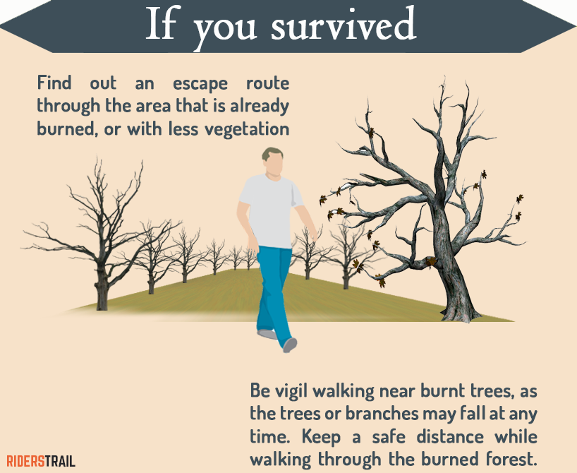 what to do after you have survived the forest fire