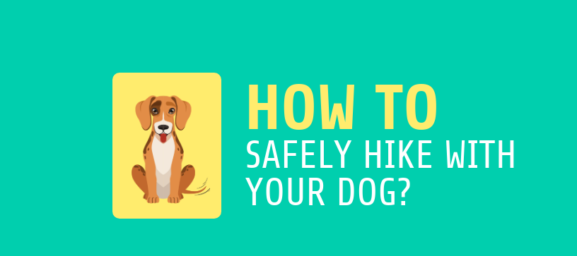 how to safely hike with your dog-2