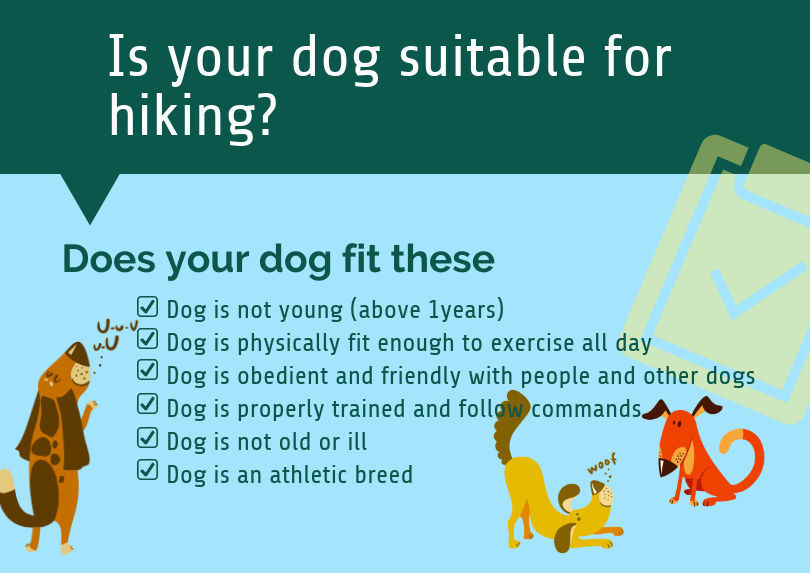is your dog suitable for hiking